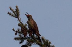 singing or bird watching