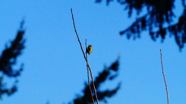 A tiny shiny hummingbird on a branch
