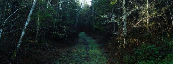A grassy path through the woods