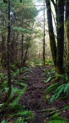 A fern lined path