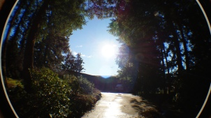 fisheye view of trees and sun