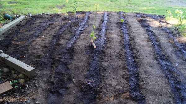 Dark stripes watered into a garden plot.