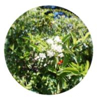 white flowers round