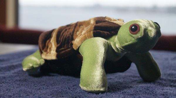 A one of a kind stuffed box turtle made by Maria L. Berg