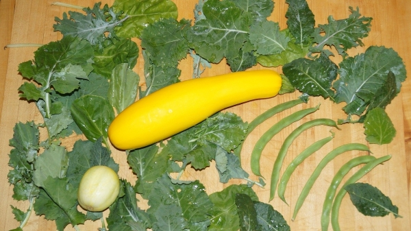 summer squash, pole beans, kale, Swiss chard and a lemon cucumber nicely displayed on a wood countertop