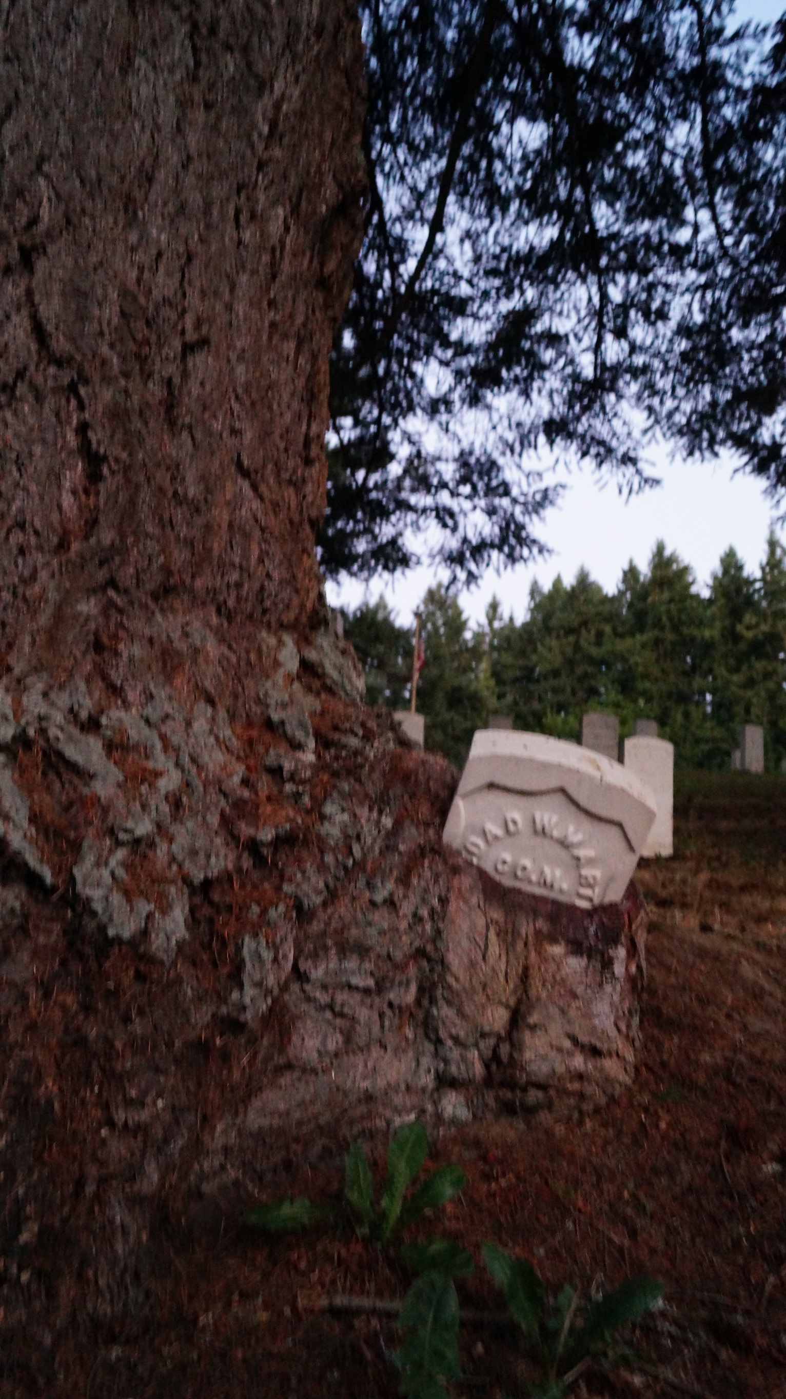 Tree eating military gravestone