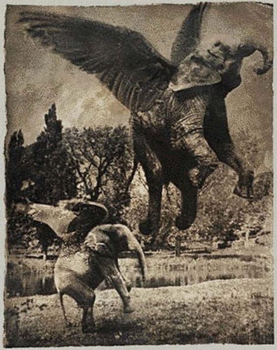 Black and white layered photography negatives create images of flying elephants