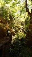 the forest before the approach to the innermost cave