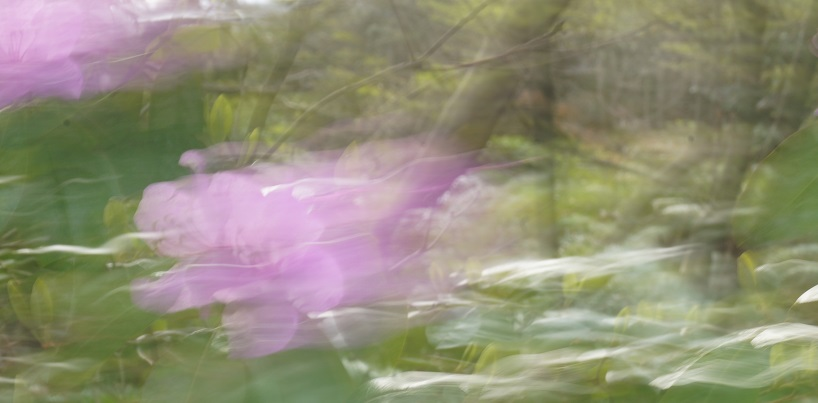 galluping purple flowers