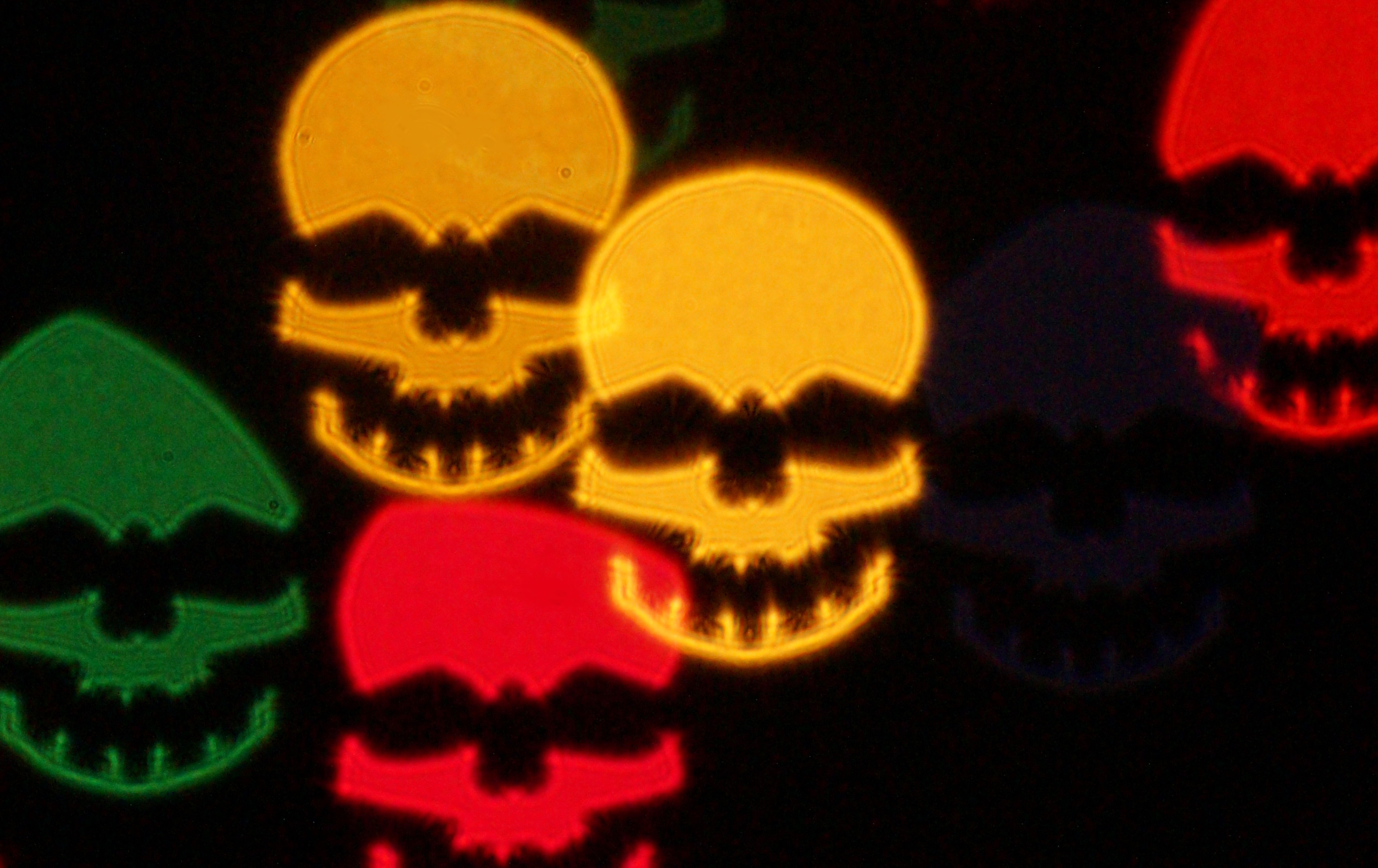 colorful skulls.jpg
