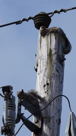 found electric squirrels