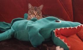 Levi and gator