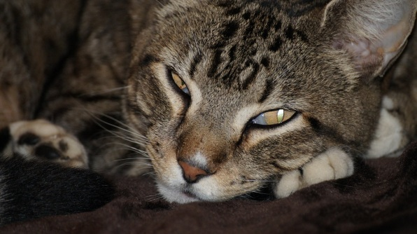 Levi's funky eyes