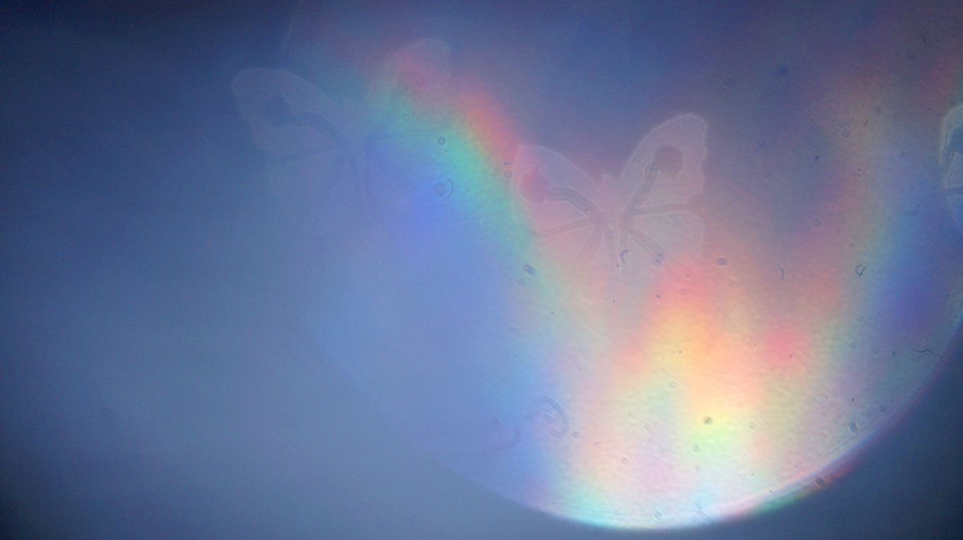 Capturing Rainbow Butterflies (2020) bokeh photograph by Maria L. Berg
