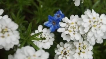 flower gentrified
