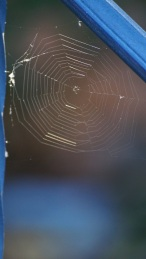 little spider's web in the sun