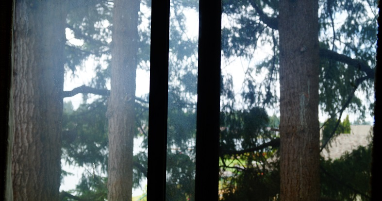 A view of fir trees through a second story window.